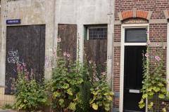 Alkmaar-in-beeld-20