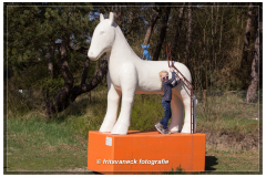 155-Paard